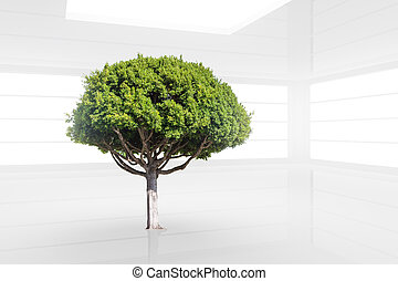 Green tree in a clean white modern interior