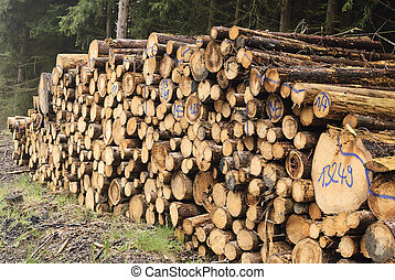 lumber industry - A stack of felled tree trunks