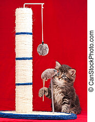 Cute kitten - Curious kitten on the scratching post over red...