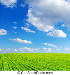 green field - field on a background of the blue sky