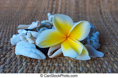 Tilt shift view to frangipani and shells