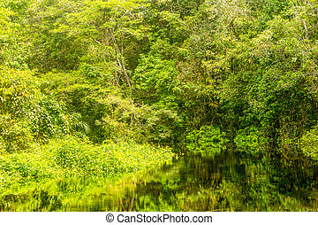 Amazonian Jungle Vegetation - Typical Amazonian Vegetation...