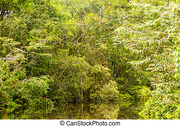 Amazonian Jungle Theme - Typical Amazonian Vegetation In...