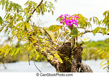 Purple Orchid Flower - Purple Orchid In Ecuadorian Amazonian...
