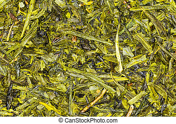 Green Tea Japan Sencha High Quality Studio Shot