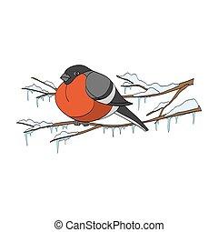 Bullfinch on winter branch. Vector illustration