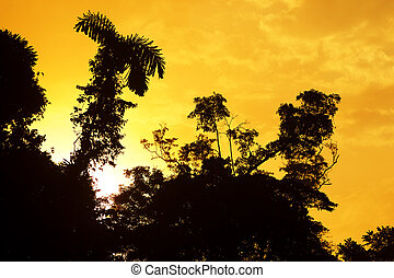 Sunset Over The Amazonian Primary Jungle - Sunrise Over The...