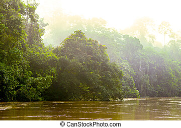 Warm Morning Sunlight In The Amazon Jungle - Early Morning...