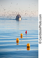 Fishing Boat With Flock Of Seagulls - Fishing Boat On Calm...