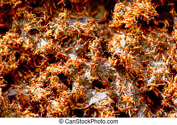 Termites Colony Close Up - Large Colony Of Termites In...