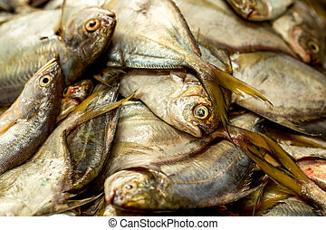 Fresh Oceanic Fish - Close Up Of Fresh Oceanic Fish Ready To...
