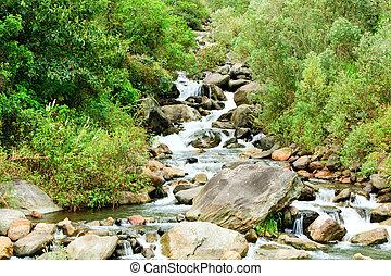 río, húmedo, bosque