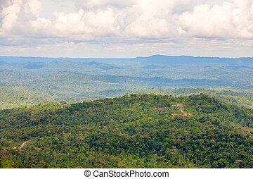 Amazonian Jungle Aerial View