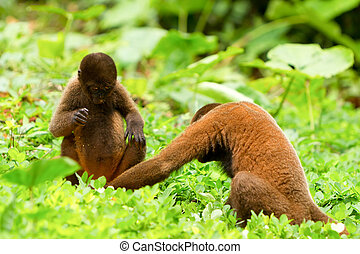 Couple Of Wild Monkeys Checking Their Genitals - Male And...