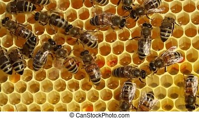 Bees convert nectar into honey - Bees convert nectar into...