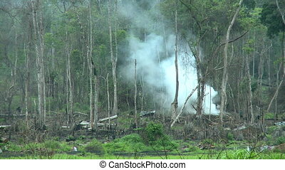 deforestation in tropical jungle - forest destroyed by slash...