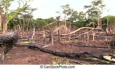 degraded forest from slash and burn - deforestation in a...