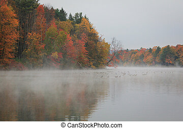 Foggy autumn morning and a pack of goose in the lake...