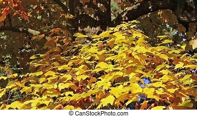 Tree branch with bright yellow colored leaves
