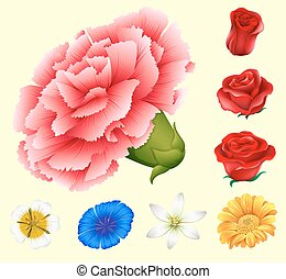 Various kind of flowers illustration