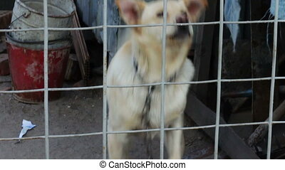The dog is barking behind a fence - A dog on a chain on a...