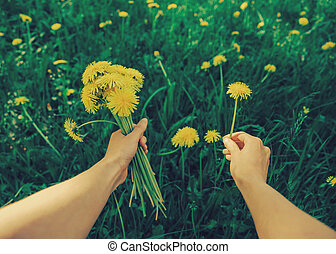 POV image of woman with dandelions - Woman picking flowers...