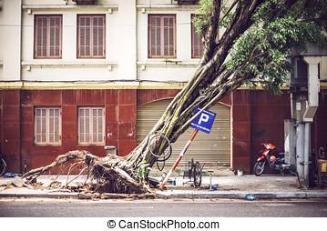 Fallen tree on street after typhoon in Hanoi, Vietnam