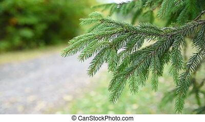 Fir Christmas Tree Branch in motion