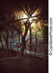 huelva,  Park, Hiszpania, kasownik, Zachód słońca