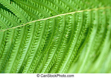 Macro shot of fern leaf