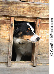 dog in her house - big dog is resting in his house