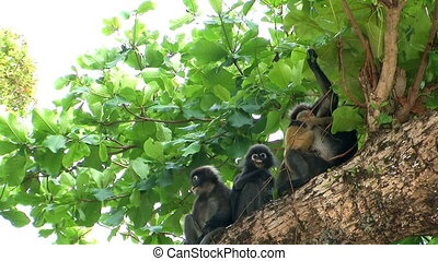 Mother monkey and baby monkey on tree. - Mother monkey and...