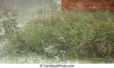 Blizzard, brick wall and high bushes - Blizzard and brick...