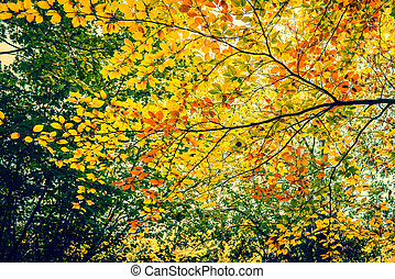 Autumn leaves in the forest trees