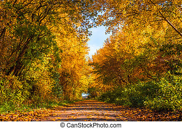 Nature path in the autumn - Nature path with trees in autumn...