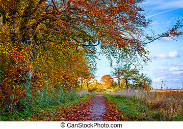 Nature path in the fall with colorful trees