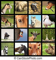 collection of farm animals images - collection of many farm...