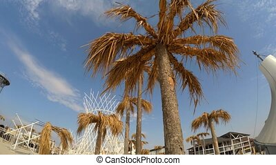 Palms And Metal Constructions At Befooz, Crimea - This is a...