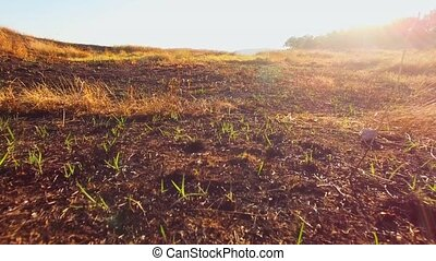 Burnt Grass Damaged By Fire At Scythian Naples, Crimea -...