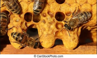 Bees and cocoons Queens Bees - Bees are paying attention to...