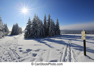 Winter landscape and snow wrapped trees in Sumava, Czech...