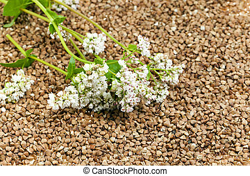 buckwheat and flower - photographed close-up grain buckwheat...
