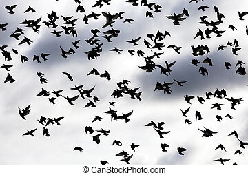 birds in the sky - photographed the birds during their...