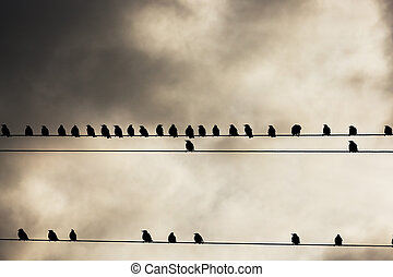 Birds on a wire - Bird photographed while resting on the...