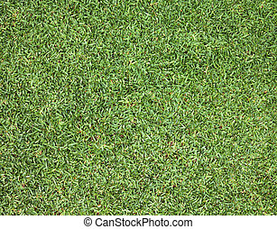 Golf Courses green lawn - Green lawns golf courses outdoor...