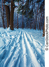 Crosscountry Ski Road at Winter Forest - Crosscountry Ski...