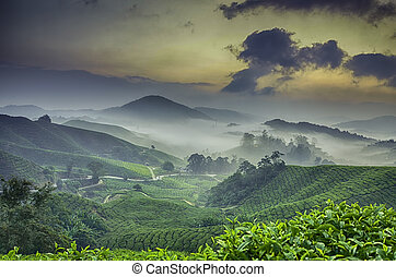 the stunning sunset sunrise image at tea plantation. hill...