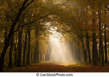 Autumn forest  - sun shining on a forest path during Autumn