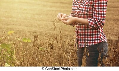Female farmer in soy bean field examining crops before...