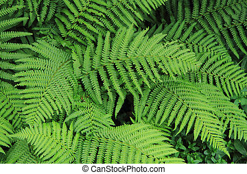 fern green texture as very nice natural background